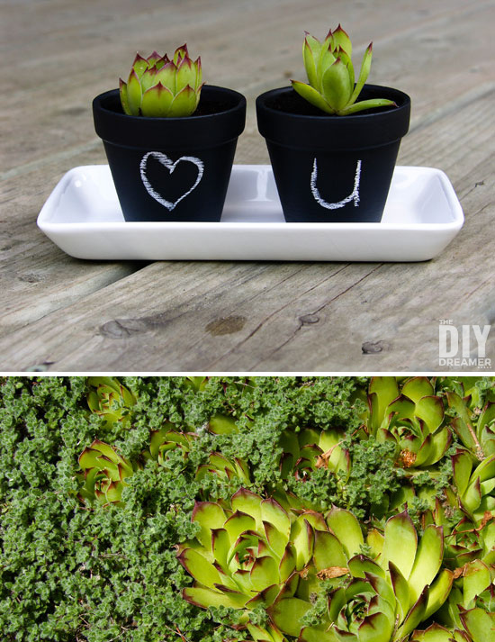 These super cute DIY Mini Chalk Pots make cute little gifts and they are really fun to make! Learn how to decorate with succulents.