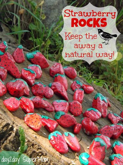 Strawberry Rocks - Keep the birds away