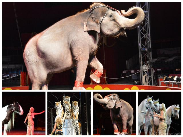 The Shrine Circus Animals