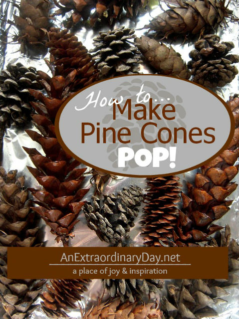 How to dry and debug pine cones