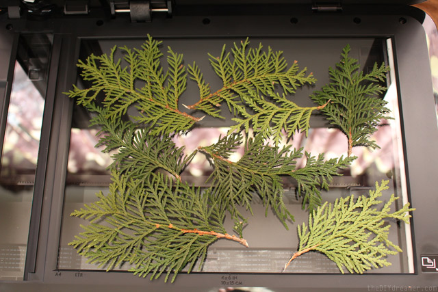 Copy Cedar Branches to make wrapping paper