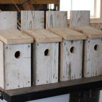 Building Bluebird Bird Houses - How to build a bird house