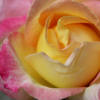 Slow Down and Smell the Roses. Appreciate the Beauty of Life.