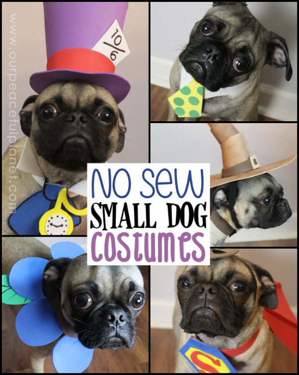 Free Crochet Patterns For Dog Halloween Costumes : DIY Halloween Costumes for the entire family - FDTR #188