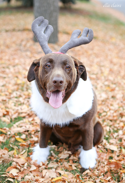 Easy DIY Sven Costume