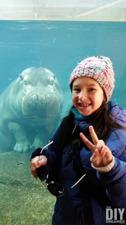 Selfie with a Hippopotamus