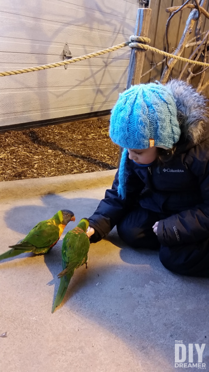 Feeding Rainbow Lorikeets