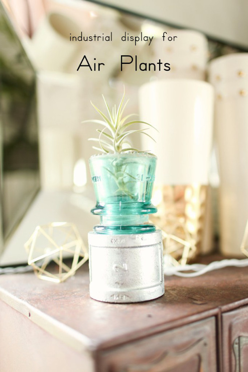 Display Your Air Plants With Electrical Insulators