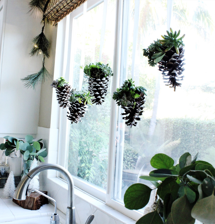 DIY Hanging Pinecone and Succulents