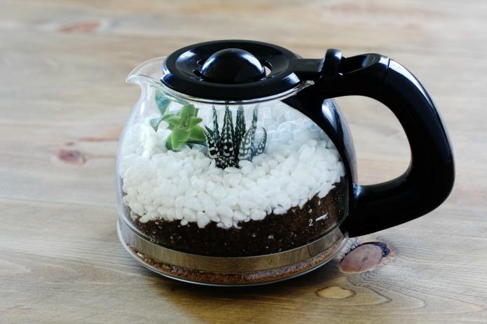 Succulent Terrarium Tutorial in Coffee Pot