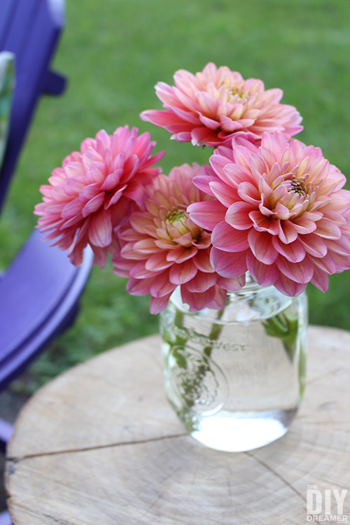 Bouquet of dahlias on a log side table.